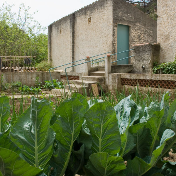 Vegetable patch and activities
