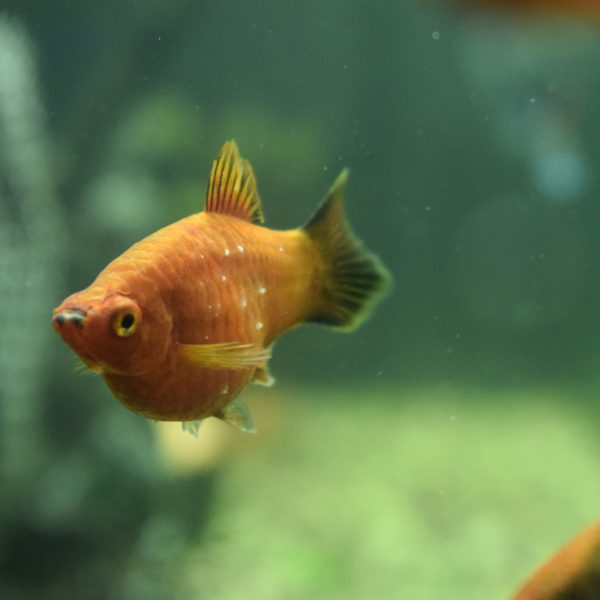 Our Platy